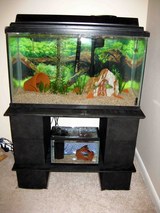 wood aquarium plans