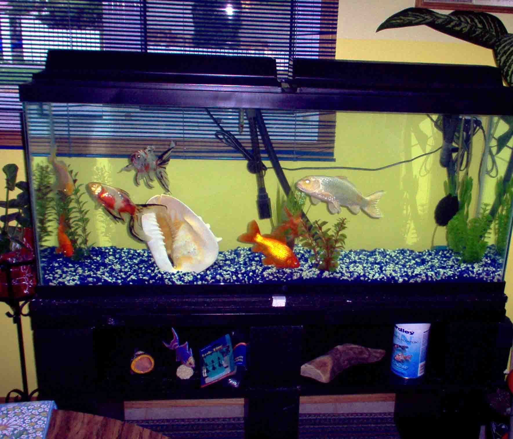 Build a strong inexpensive aquarium stand random bits for 55 gallon aquarium decoration ideas