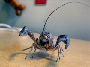 big-crayfish-molt-set