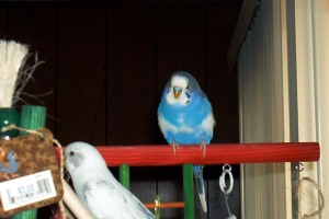 bird-amos-and-pearl-on-gym-jul071