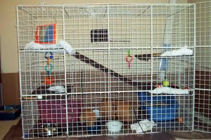 bunny-cage-front-doors-closed