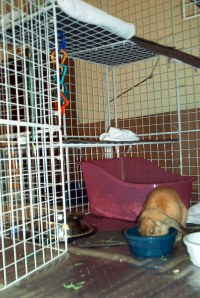 bunny-cage-inside-left-low