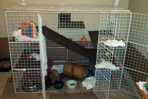 bunny-cage-jul07