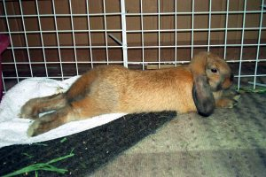 bunny-monty-stretched-out-jul07-smaller